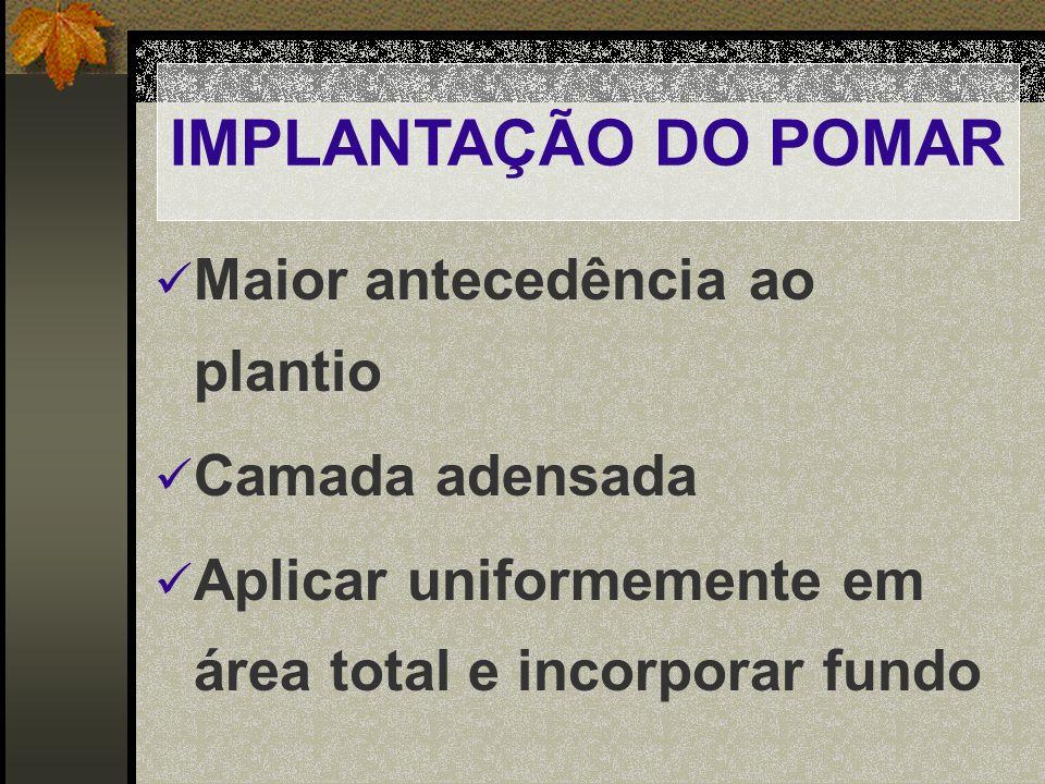 IMPLANTAÇÃO DO POMAR Maior antecedência ao plantio Camada adensada