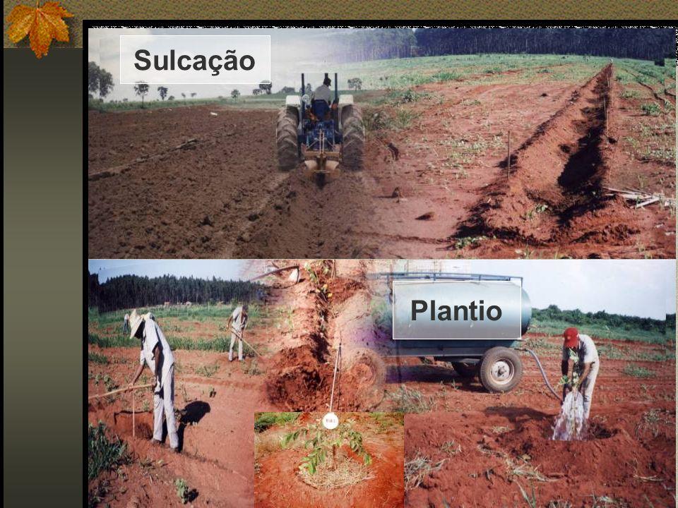 Sulcação Plantio