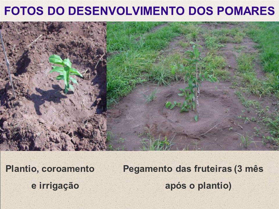 FOTOS DO DESENVOLVIMENTO DOS POMARES
