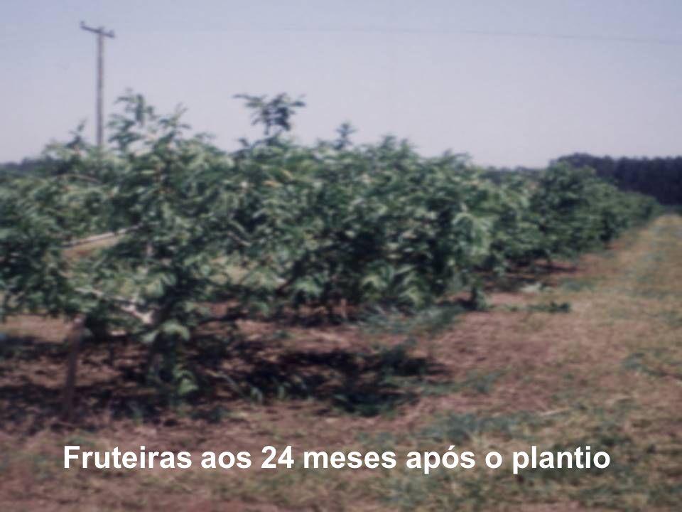 Fruteiras aos 24 meses após o plantio