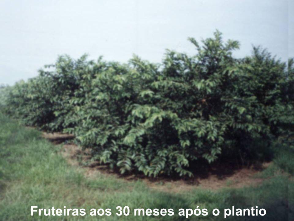 Fruteiras aos 30 meses após o plantio