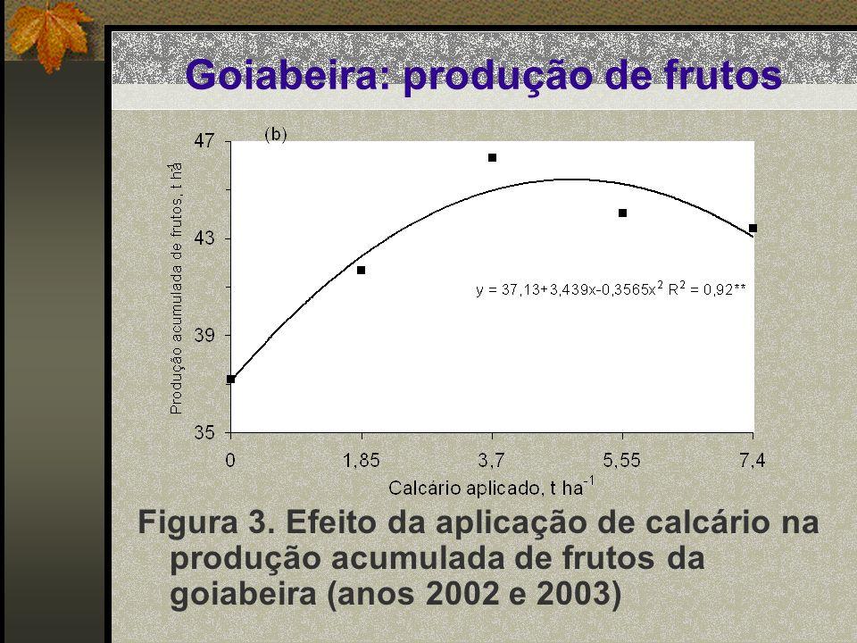 Goiabeira: produção de frutos