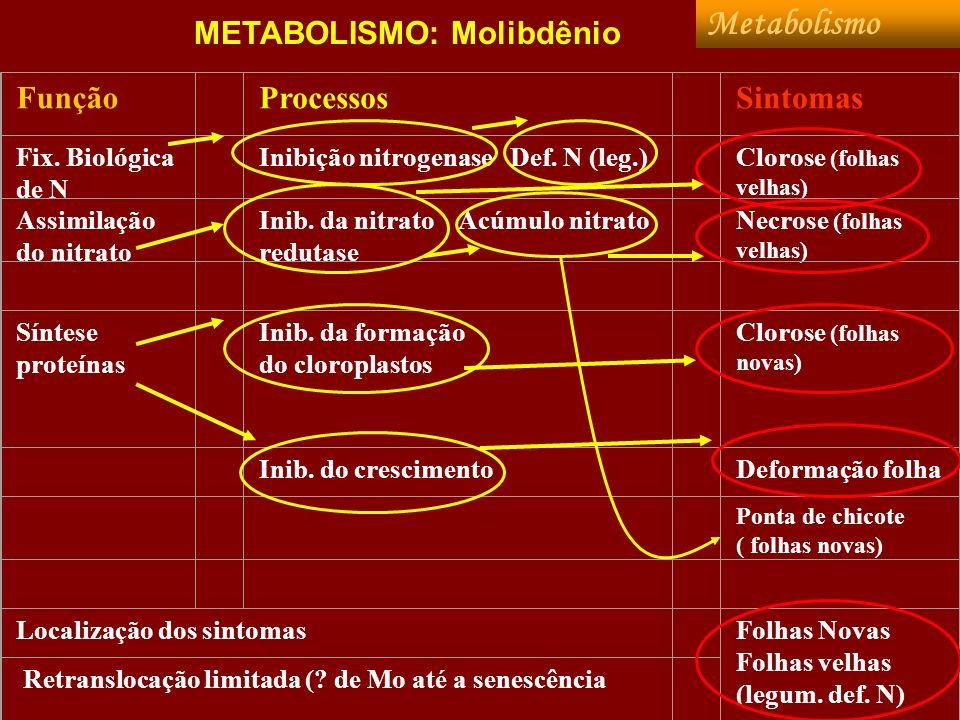 Metabolismo METABOLISMO: Molibdênio Função Processos Sintomas