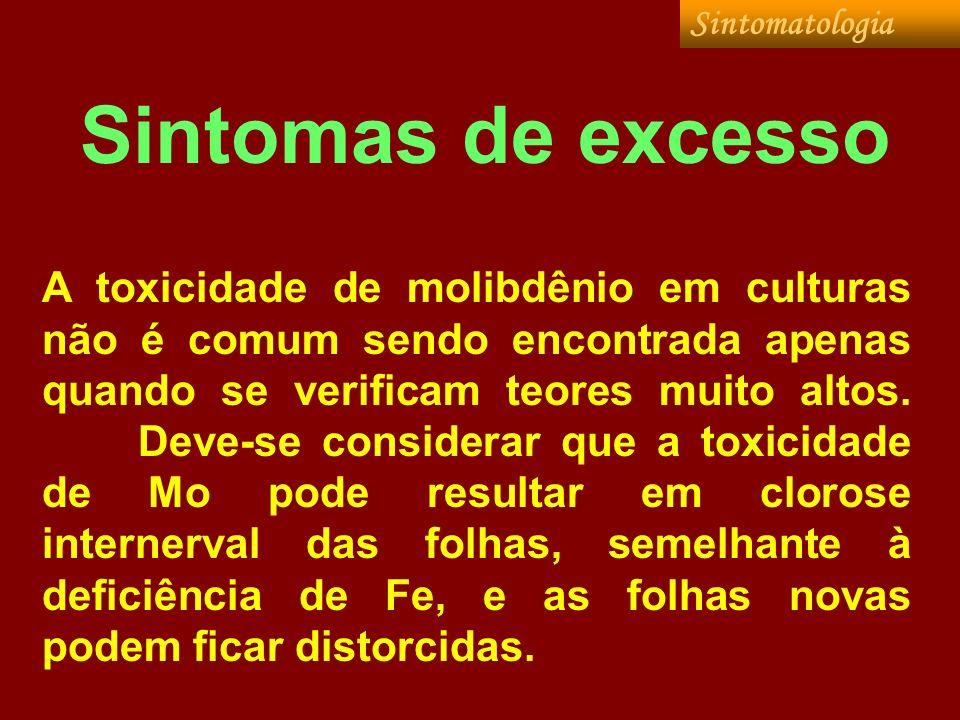 Sintomatologia Sintomas de excesso.