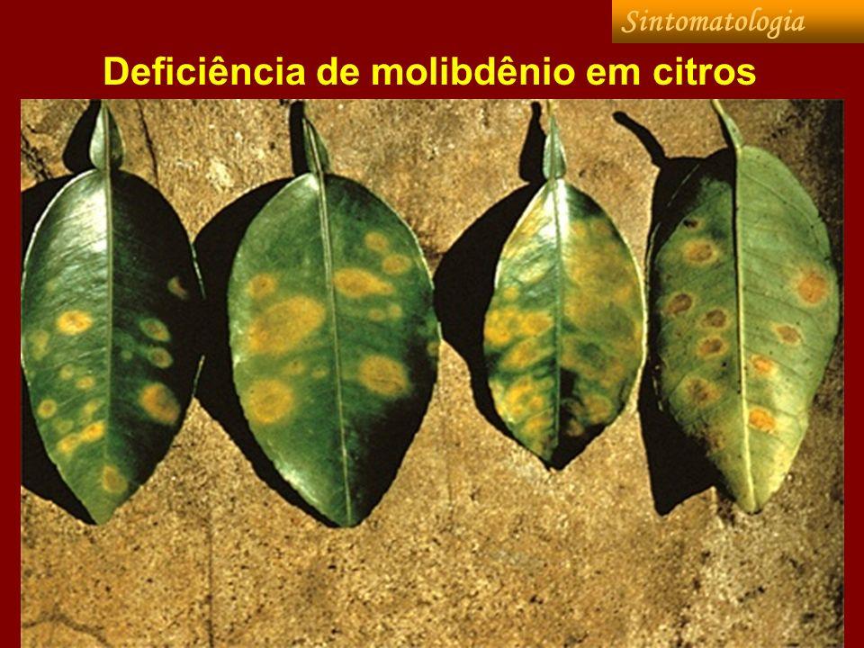 Deficiência de molibdênio em citros