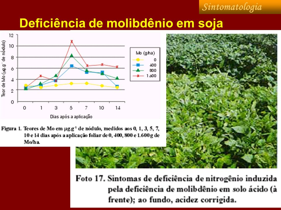 Deficiência de molibdênio em soja