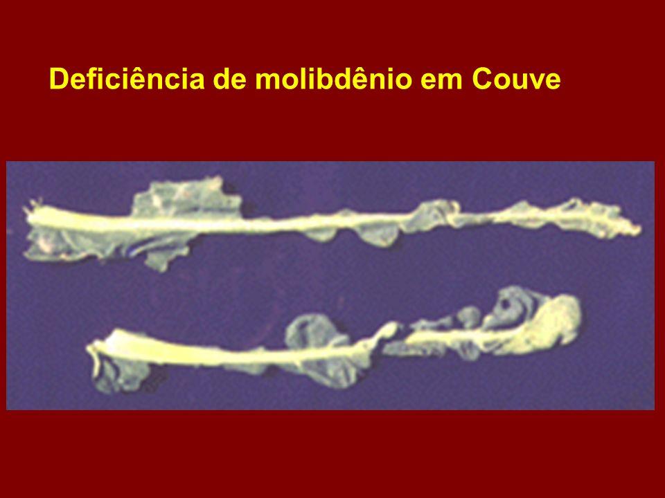 Deficiência de molibdênio em Couve