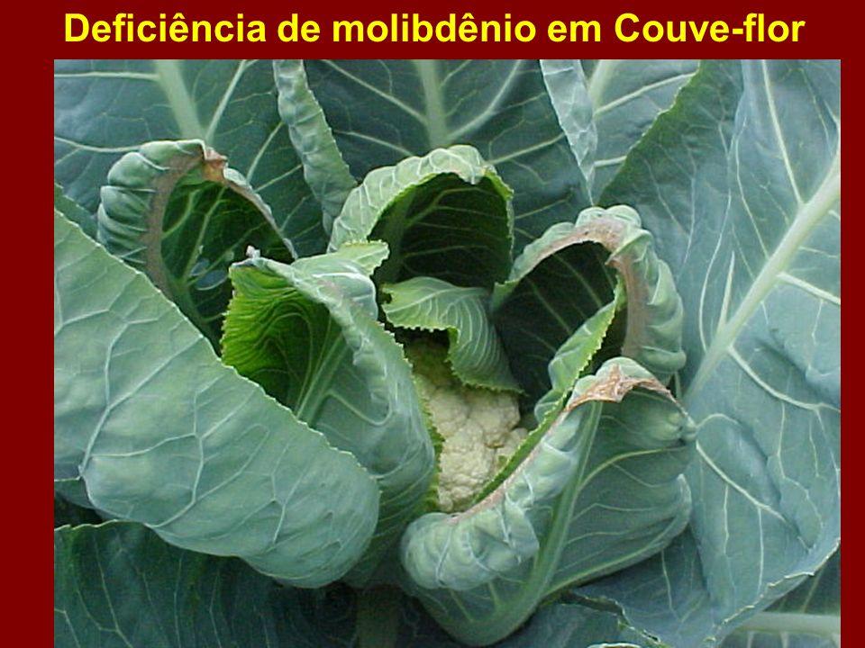 Deficiência de molibdênio em Couve-flor