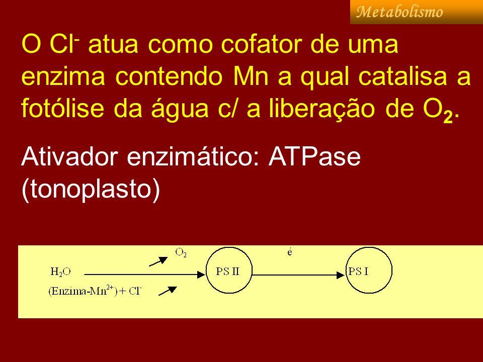 Ativador enzimático: ATPase (tonoplasto)