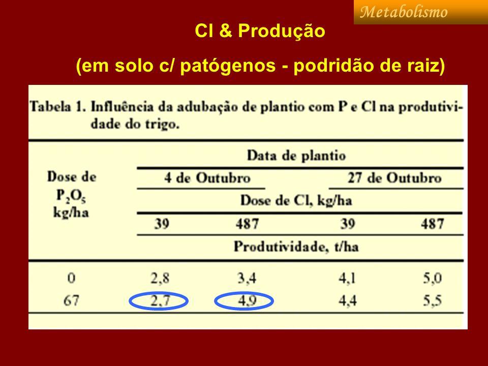 (em solo c/ patógenos - podridão de raiz)