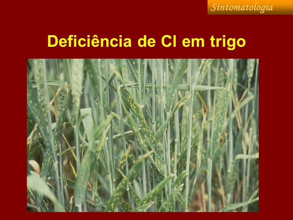 Deficiência de Cl em trigo