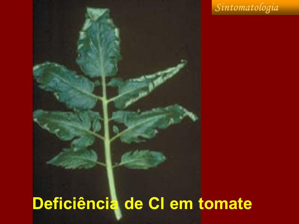 Deficiência de Cl em tomate