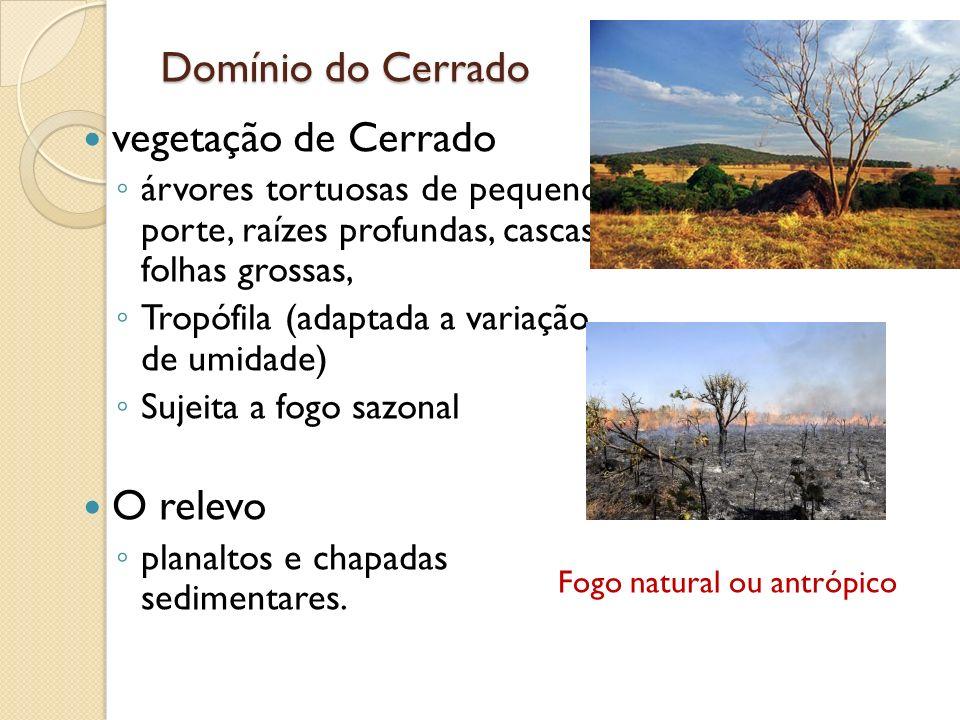 Domínio do Cerrado vegetação de Cerrado O relevo