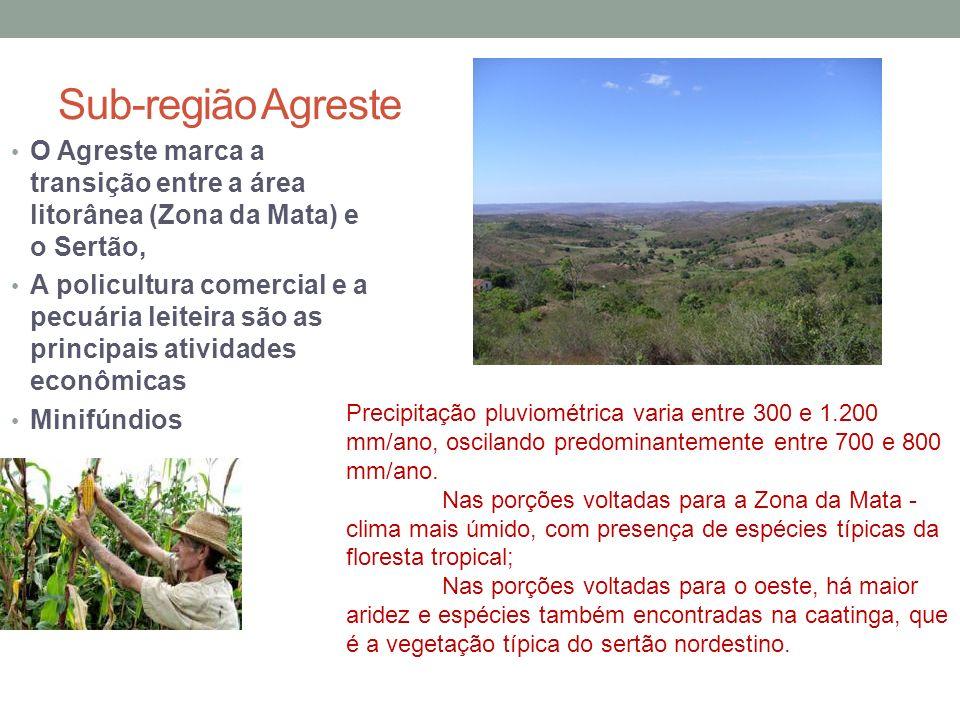Sub-região Agreste O Agreste marca a transição entre a área litorânea (Zona da Mata) e o Sertão,