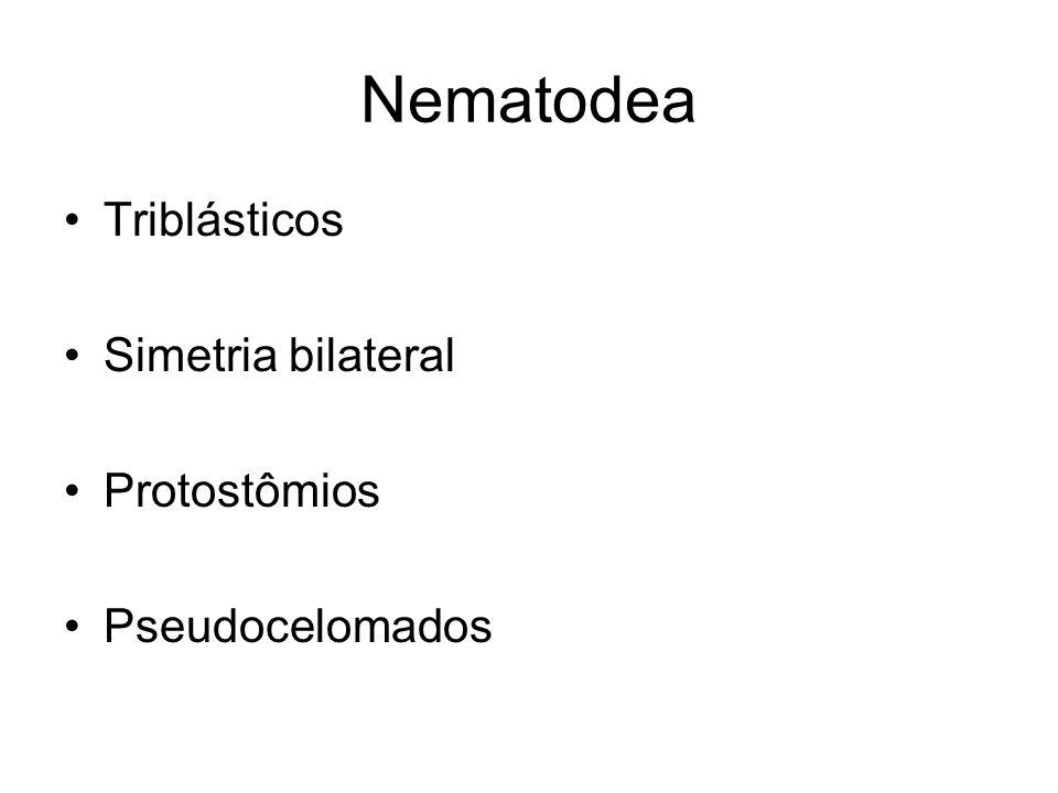 Nematodea Triblásticos Simetria bilateral Protostômios Pseudocelomados