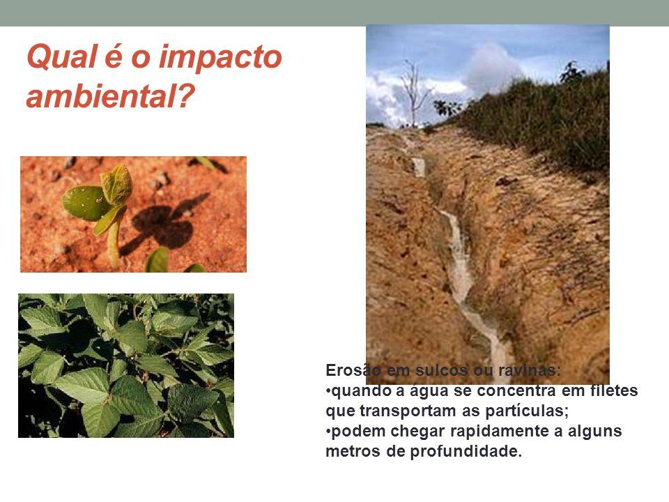 Qual é o impacto ambiental