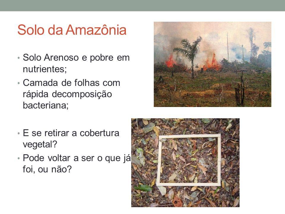 Solo da Amazônia Solo Arenoso e pobre em nutrientes;