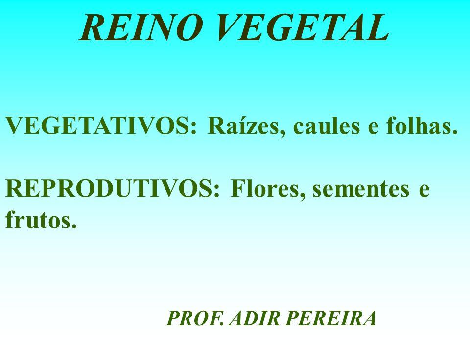 REINO VEGETAL VEGETATIVOS: Raízes, caules e folhas.