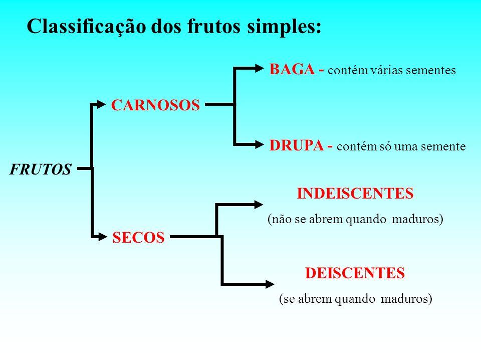 Classificação dos frutos simples: