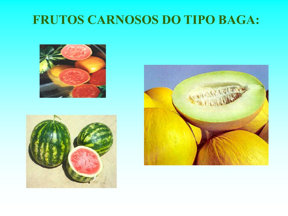 FRUTOS CARNOSOS DO TIPO BAGA: