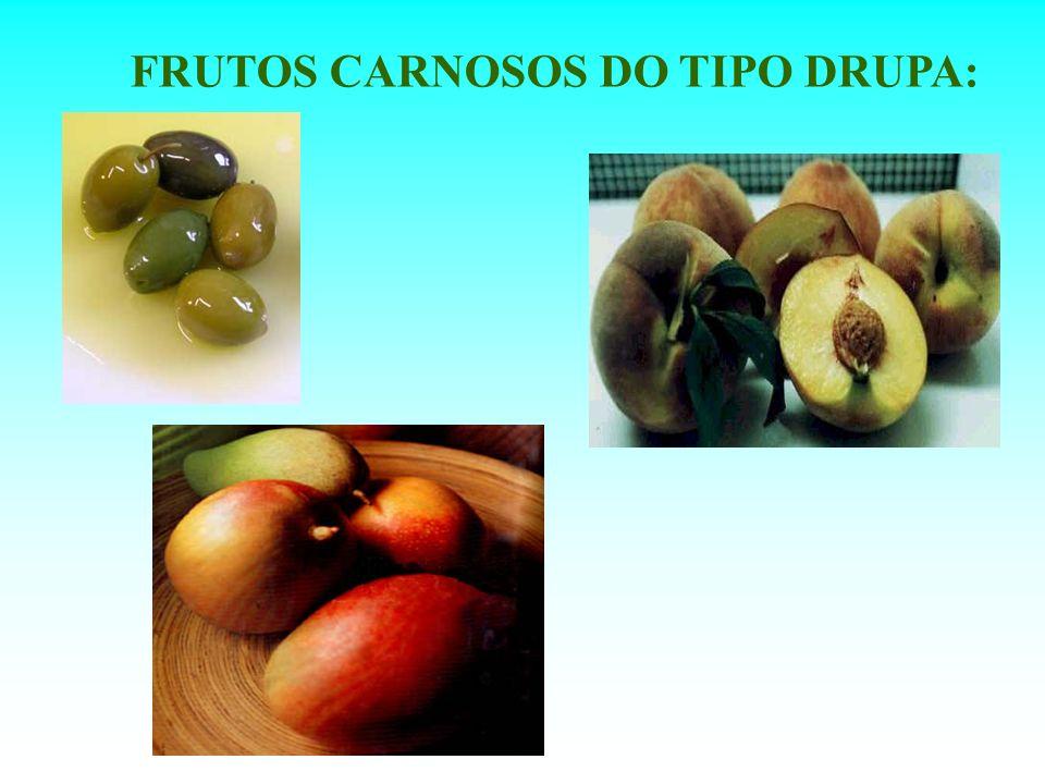 FRUTOS CARNOSOS DO TIPO DRUPA: