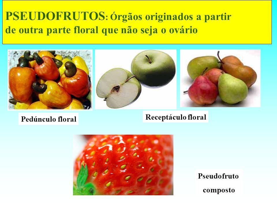 PSEUDOFRUTOS: Órgãos originados a partir