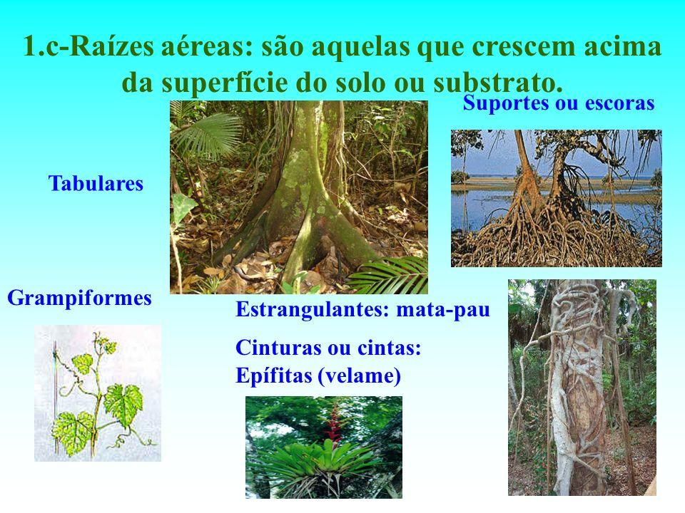 1.c-Raízes aéreas: são aquelas que crescem acima da superfície do solo ou substrato.