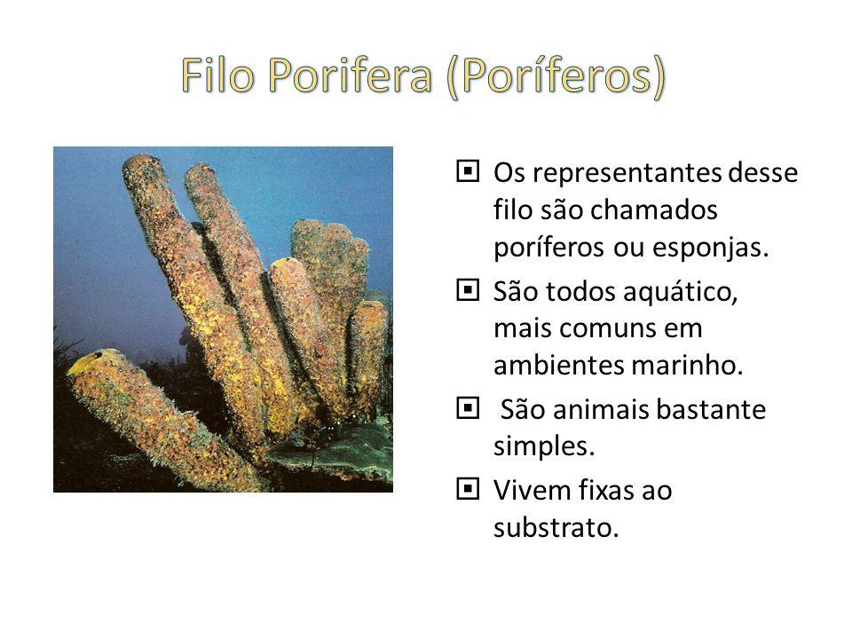 Filo Porifera (Poríferos)