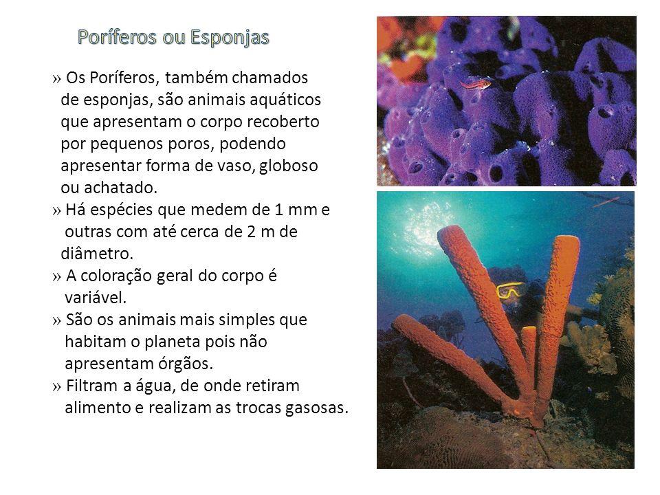 Poríferos ou Esponjas » Os Poríferos, também chamados