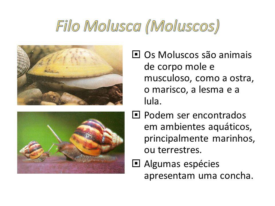 Filo Molusca (Moluscos)