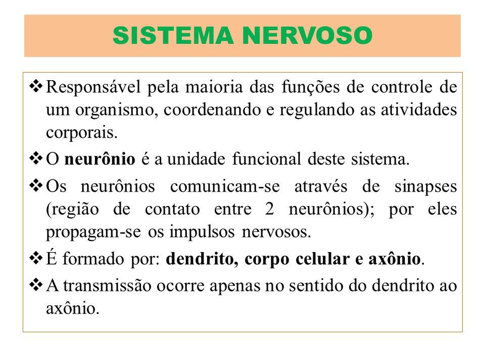 SISTEMA NERVOSO Responsável pela maioria das funções de controle de um organismo, coordenando e regulando as atividades corporais.