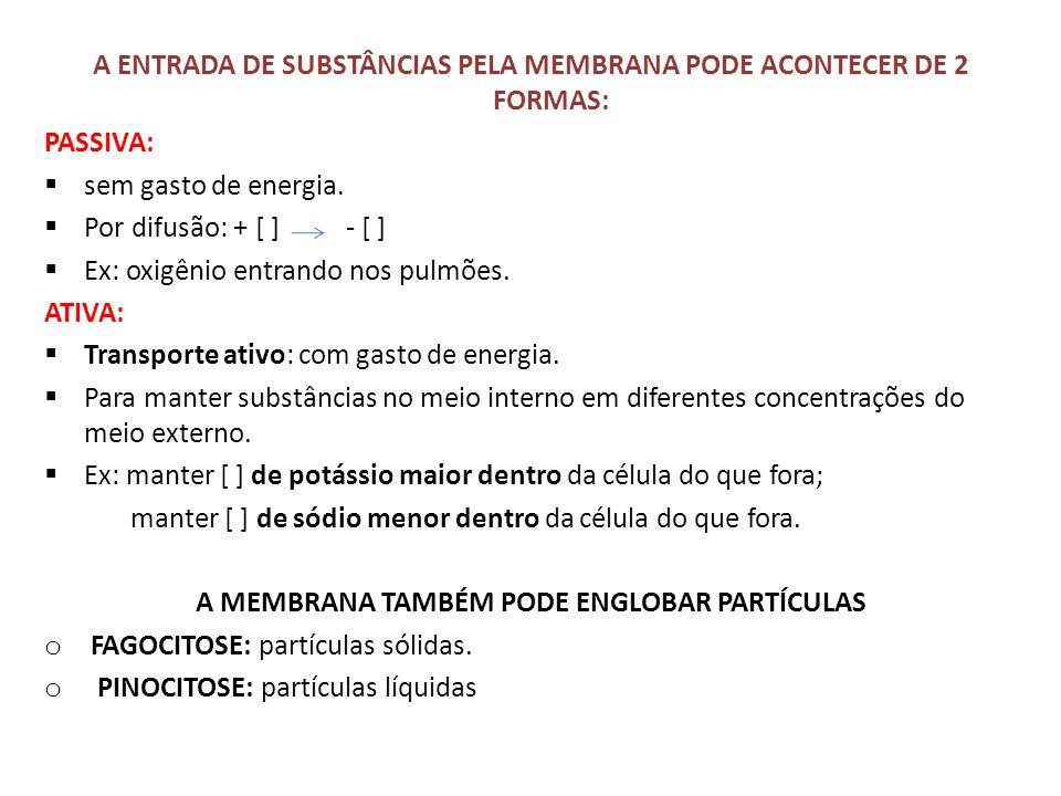 A ENTRADA DE SUBSTÂNCIAS PELA MEMBRANA PODE ACONTECER DE 2 FORMAS: