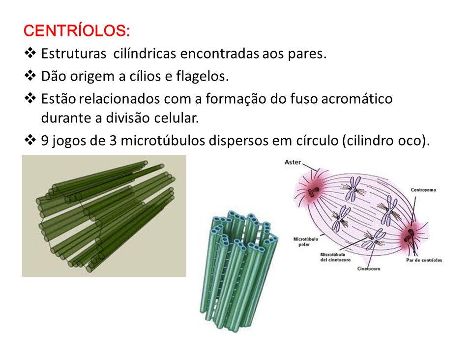 CENTRÍOLOS: Estruturas cilíndricas encontradas aos pares. Dão origem a cílios e flagelos.