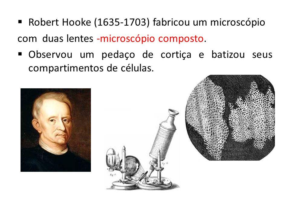 Robert Hooke (1635-1703) fabricou um microscópio