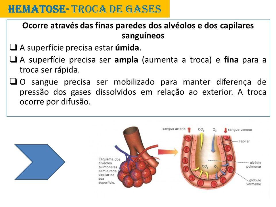 HEMATOSE- TROCA DE GASES