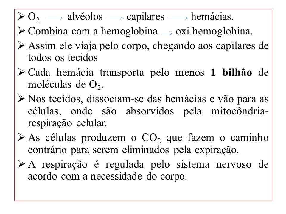 O2 alvéolos capilares hemácias.