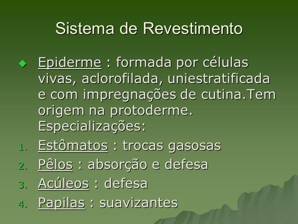 Sistema de Revestimento