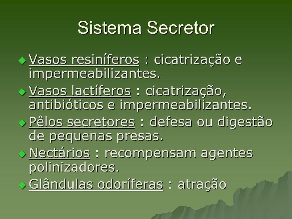 Sistema Secretor Vasos resiníferos : cicatrização e impermeabilizantes. Vasos lactíferos : cicatrização, antibióticos e impermeabilizantes.