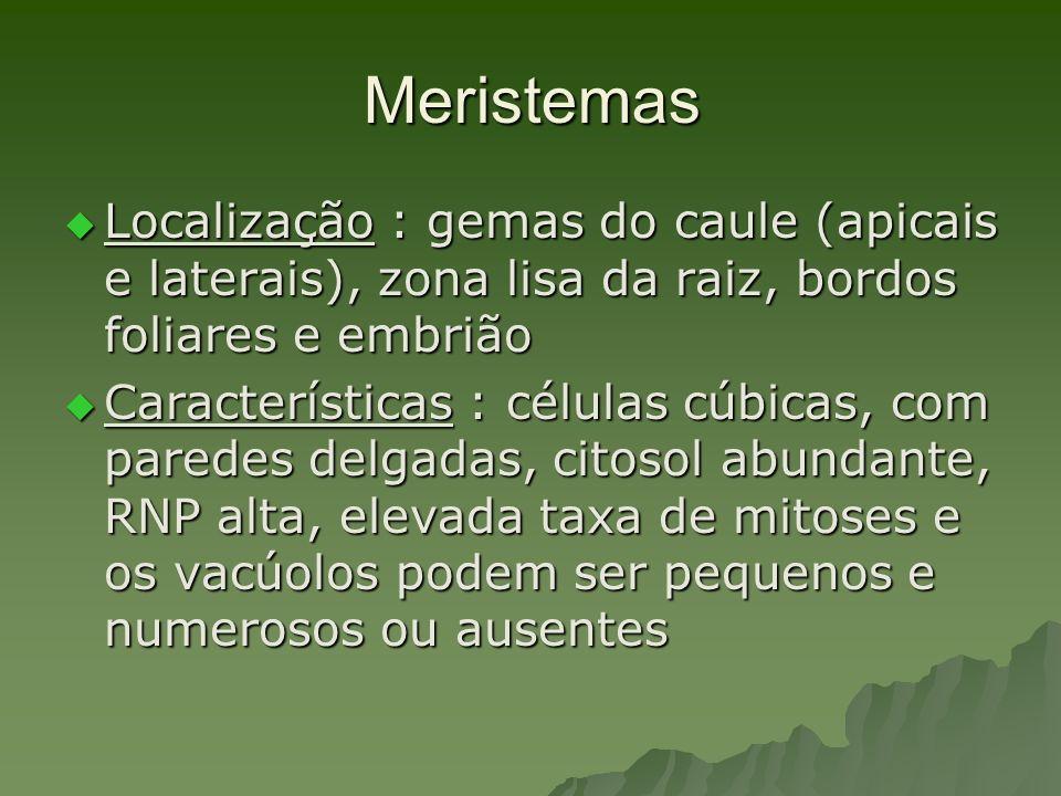 Meristemas Localização : gemas do caule (apicais e laterais), zona lisa da raiz, bordos foliares e embrião.