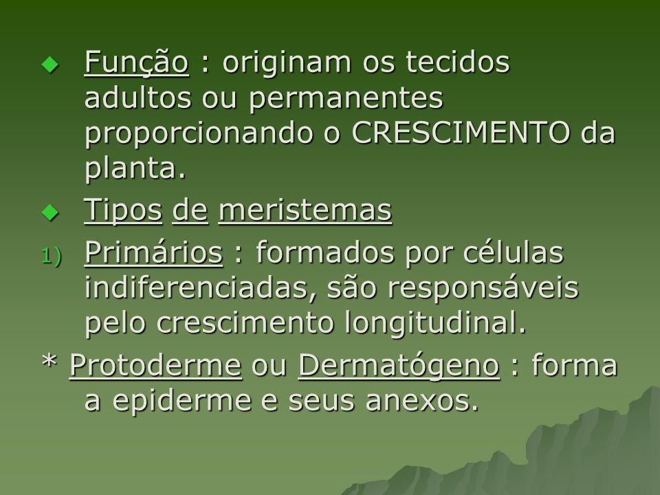 Função : originam os tecidos adultos ou permanentes proporcionando o CRESCIMENTO da planta.