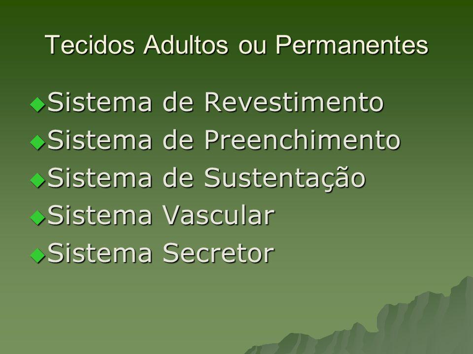 Tecidos Adultos ou Permanentes