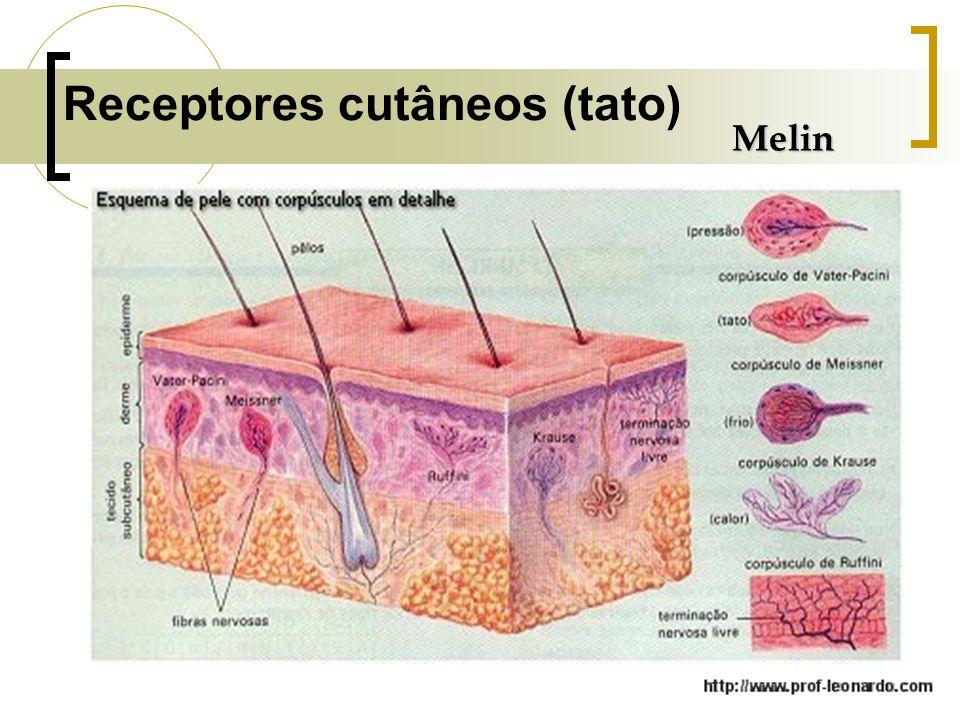 Receptores cutâneos (tato)