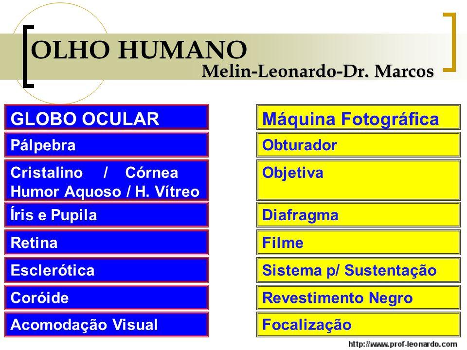 OLHO HUMANO Melin-Leonardo-Dr. Marcos GLOBO OCULAR Máquina Fotográfica