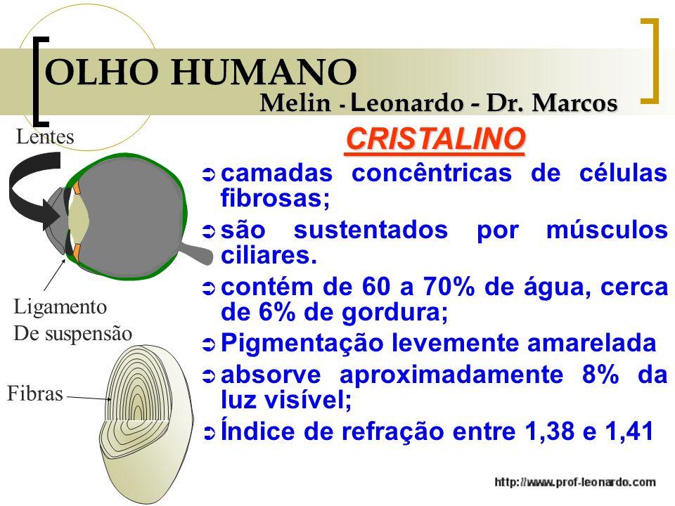 OLHO HUMANO CRISTALINO Melin - Leonardo - Dr. Marcos