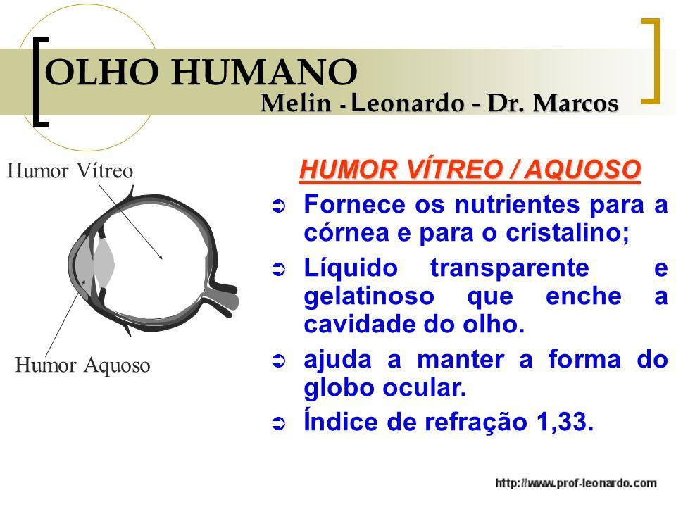 OLHO HUMANO Melin - Leonardo - Dr. Marcos HUMOR VÍTREO / AQUOSO