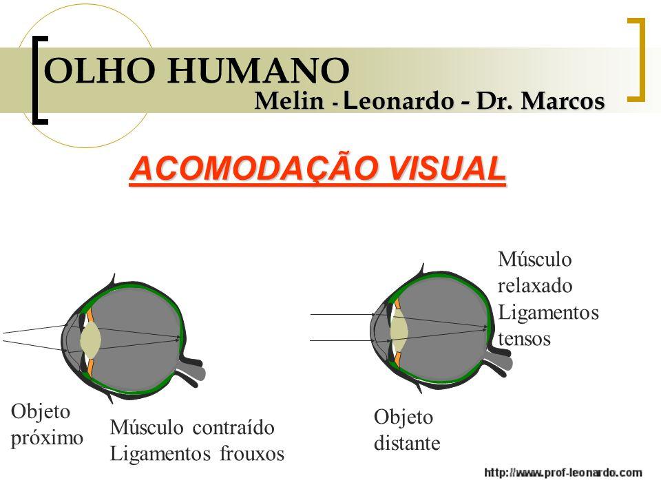 OLHO HUMANO ACOMODAÇÃO VISUAL Melin - Leonardo - Dr. Marcos
