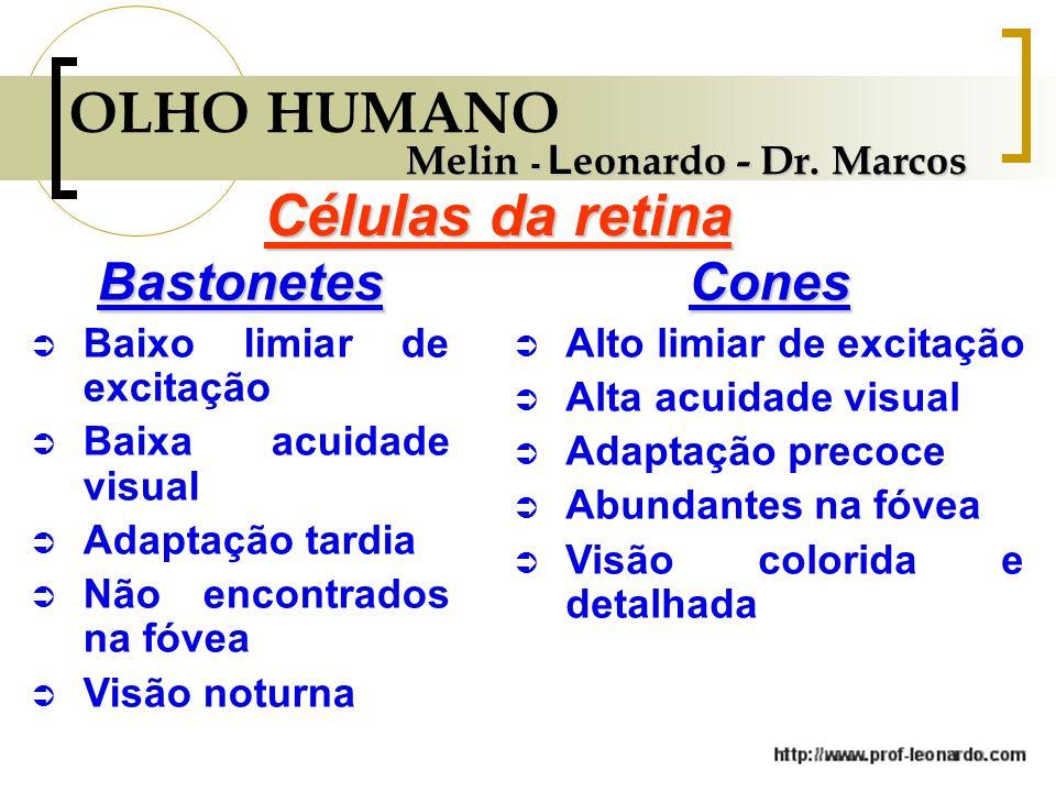 OLHO HUMANO Células da retina Bastonetes Cones