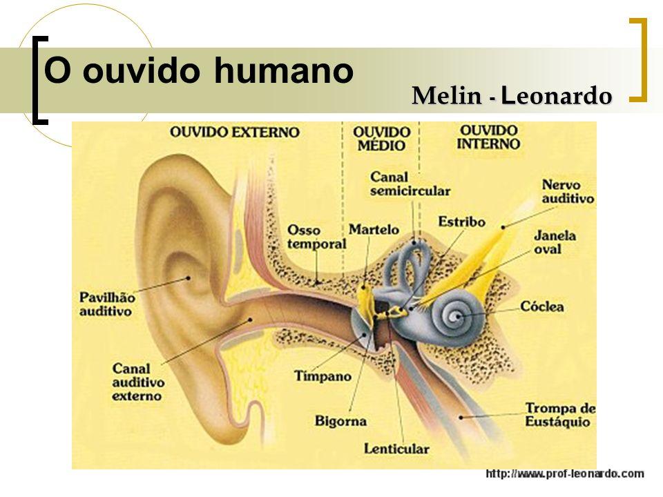 O ouvido humano Melin - Leonardo
