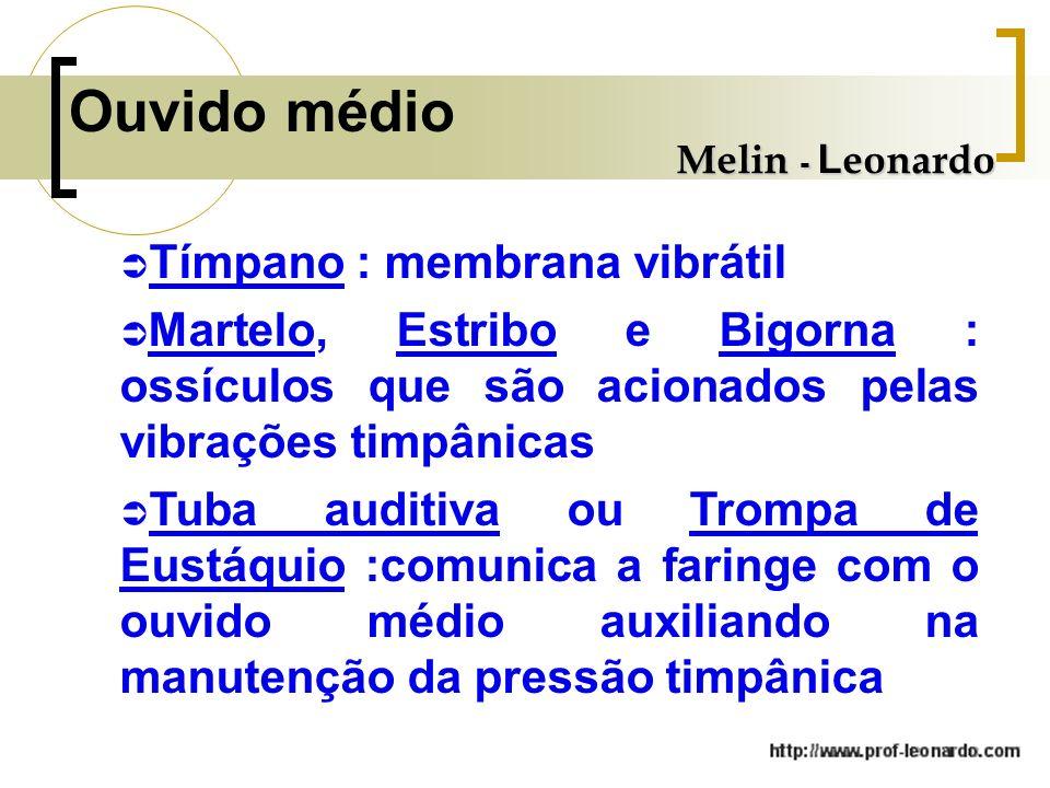 Ouvido médio Tímpano : membrana vibrátil