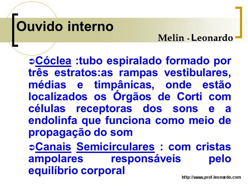 Ouvido interno Melin - Leonardo.